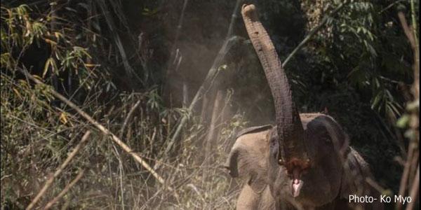 elephantp-ko-myo
