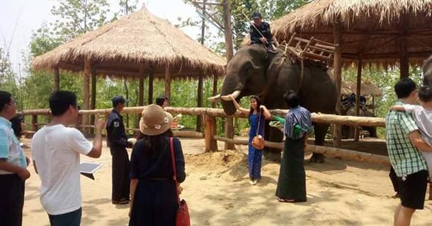 Nga Like Thar Elephant