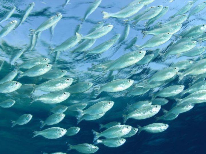 ပထမဆံုးေသာ ငါးလုပ္ငန္းတကၠသိုလ္ (Fisheries University) ေပၚေပါက္လာေစရန္ စီစဥ္ေန