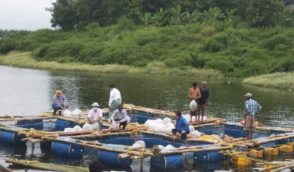 နေပြည်တော်တွင် ကုန်ကျစရိတ်သက်သာသည့် ရေပေါ်ငါးမွေးလှောင်အိမ်ဖြင့် တစ်နိုင်တစ်ပိုင် ငါးမွေးမြူခြင်း စမ်းသပ်ဆောင်ရွက်