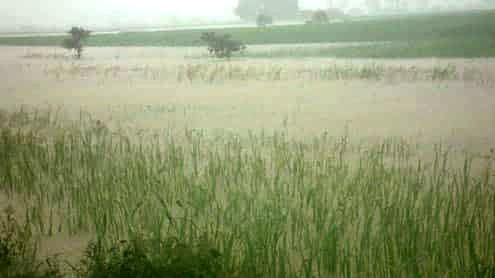 ယခုနှစ် ရေကြီးနစ်မြုပ်သည့် မိုးစပါး စိုက်ဧကပေါင်း ၁၅၃၀၀၀ ကျော် ထိရှိပြီး ပျက်ဆီးဧကပေါင်း ၂၇၀၀၀ ကျော်ထိရှိ